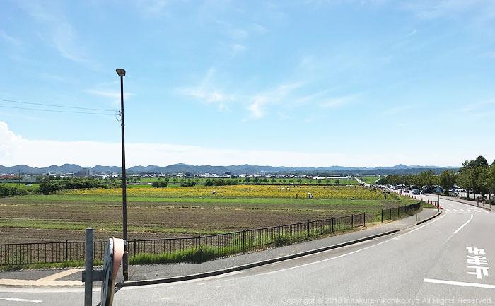 小野市立ひまわりの丘公園2018年8月