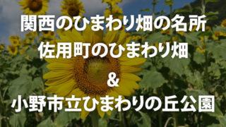 関西のひまわり畑の名所 佐用町のひまわり畑&小野市立ひまわりの丘公園