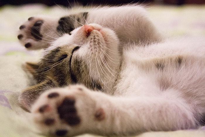 かわいい癒しの猫画像まとめ