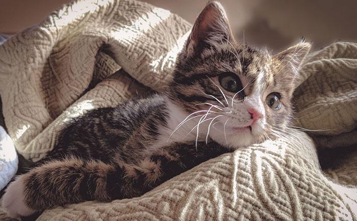 jQuery - ややこしいprependとbeforeとprependToがスッキリする話【デモサンプル付き】- まとめ おつかれ様ネコ